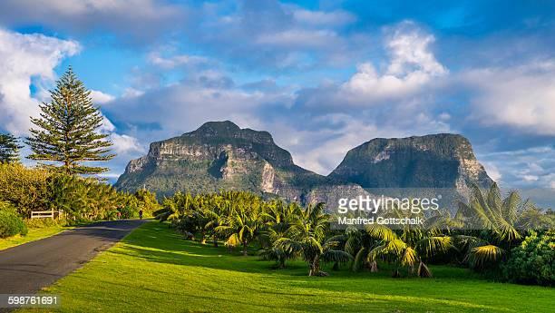 Palm grove at Lagoon Road