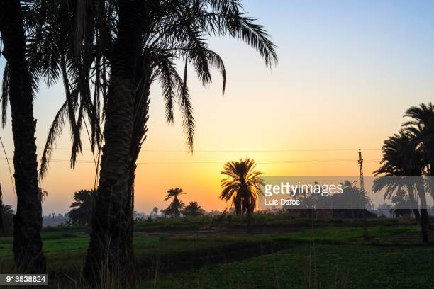 palm grove by the nile at sunset - minya egypt stock pictures, royalty-free photos & images