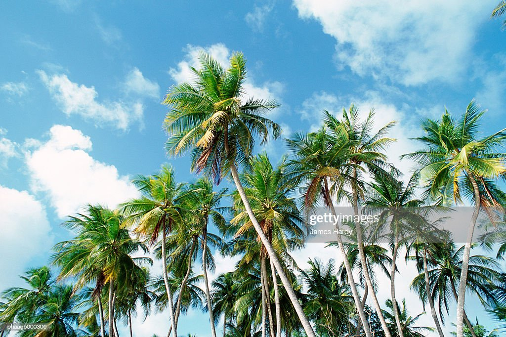 Palm grove : Stockfoto