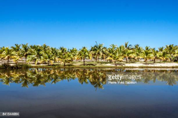 Palm grove reflection