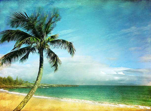 Palm In Paradise Wall Art