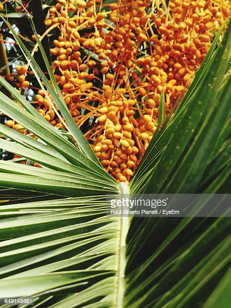 Palm Leaf And Areca Nuts