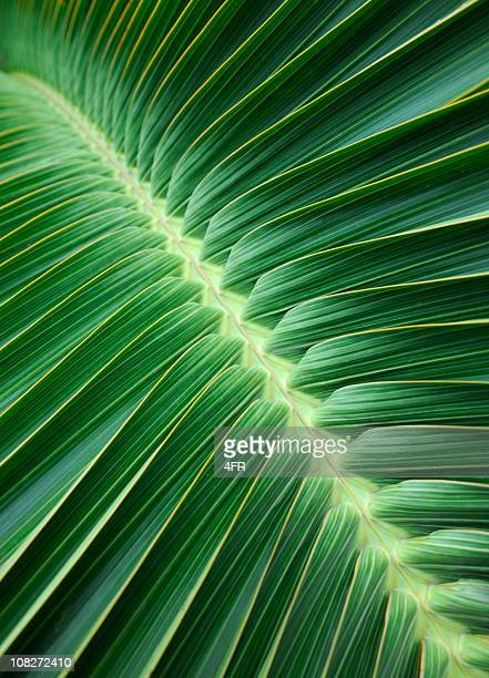 Palm Leaf Background (XXXL)