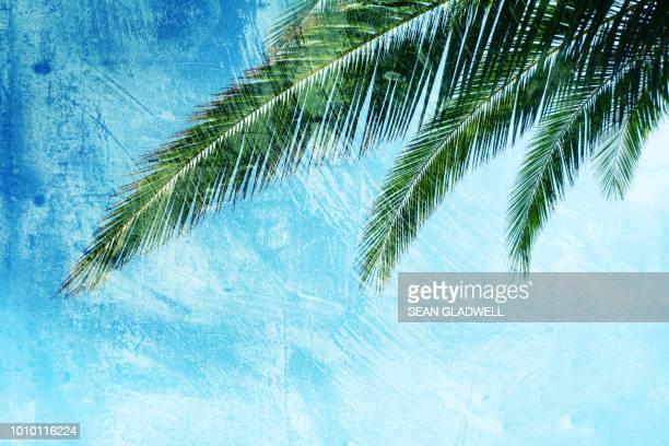 Palm leaf blue texture backdrop