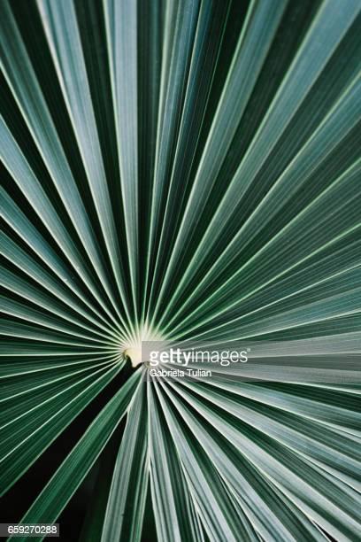 Palm leaf dark green background