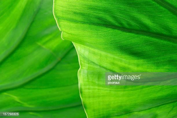 Détail de la feuille de palmier