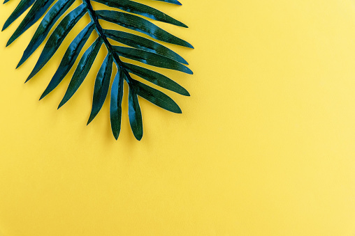 Palm Leaf on Yellow Backgrounds Summer Concept - gettyimageskorea