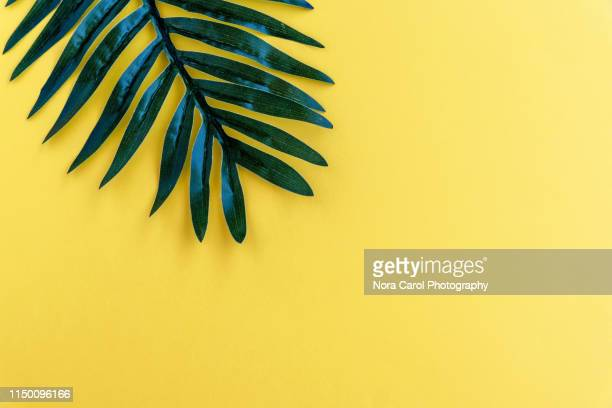 palm leaf on yellow backgrounds summer concept - bloem plant stockfoto's en -beelden