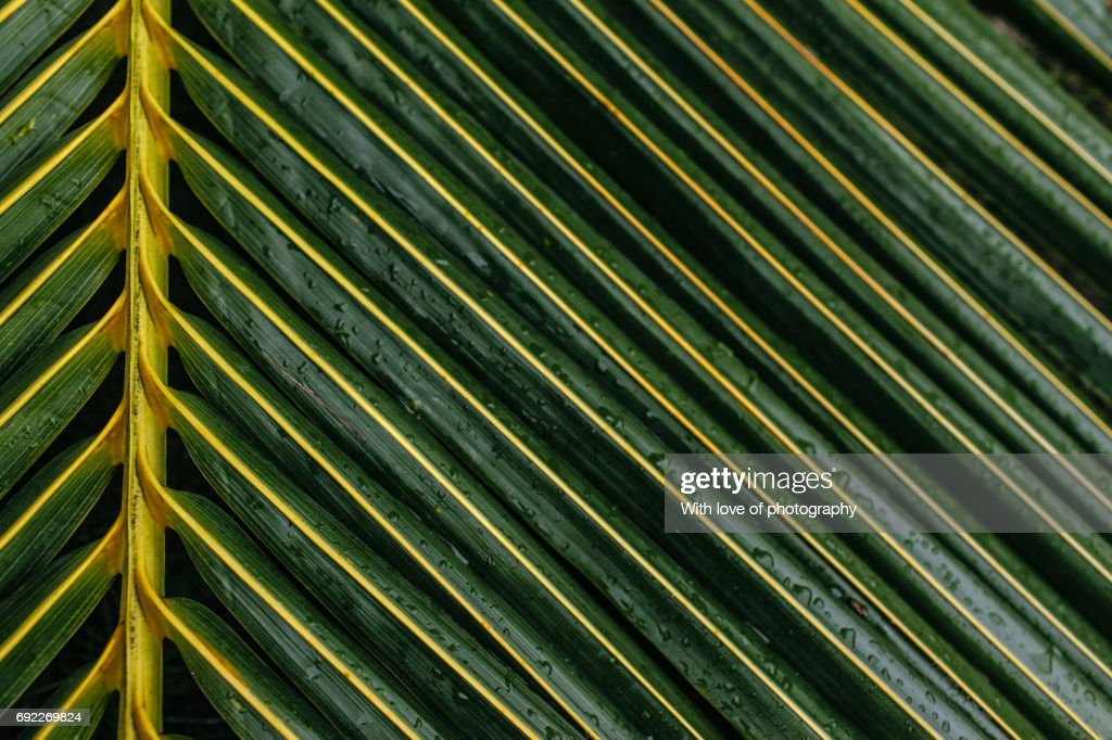 Palm Leaf Pattern Green Tropical Plant Background Texture Close Up Stock