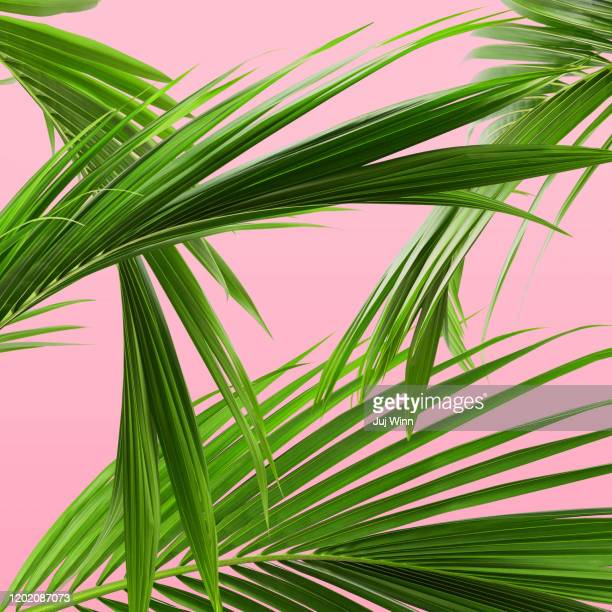 palm leaf pattern - palm tree stock pictures, royalty-free photos & images
