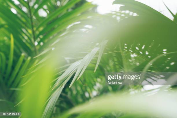 palm leaf patterns - palm leaf stock pictures, royalty-free photos & images
