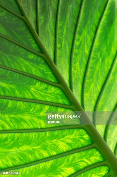 palm leaf - chlorophyll stock pictures, royalty-free photos & images
