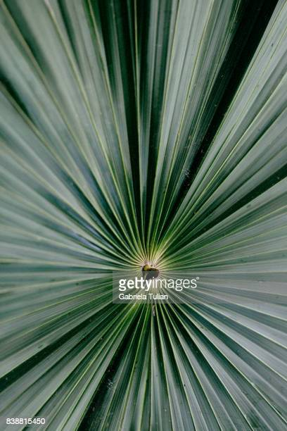 palm leaf - coconut stock pictures, royalty-free photos & images