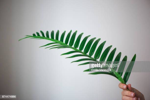 palm leaf - branch plant part stock pictures, royalty-free photos & images