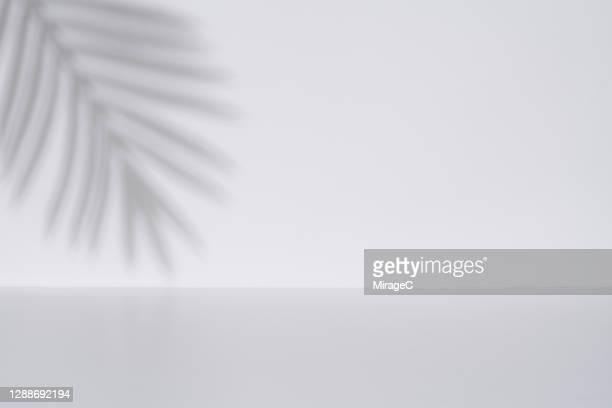 palm leaf shadow on white wall backdrop - schlagschatten stock-fotos und bilder