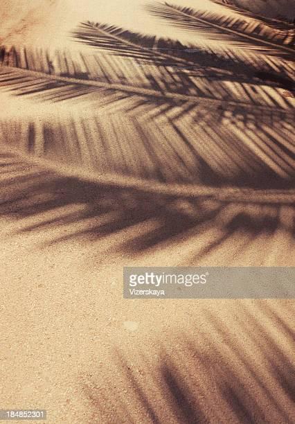 Hoja de palmera sombras en la planta baja