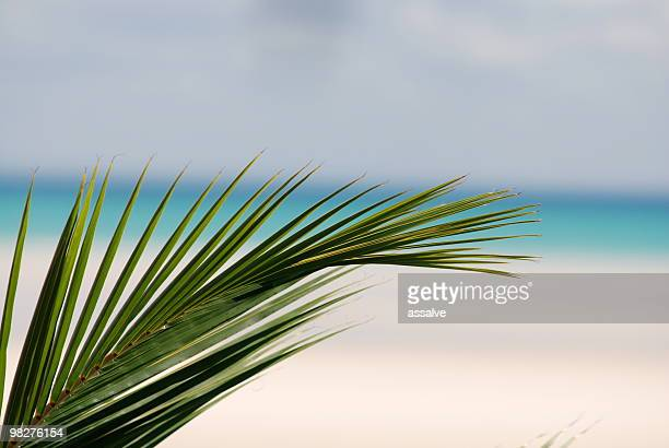 palm leaf with turquoise sea and white sand beach background