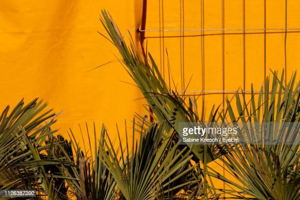 palm leaves against orange wall - sabine kriesch stock-fotos und bilder