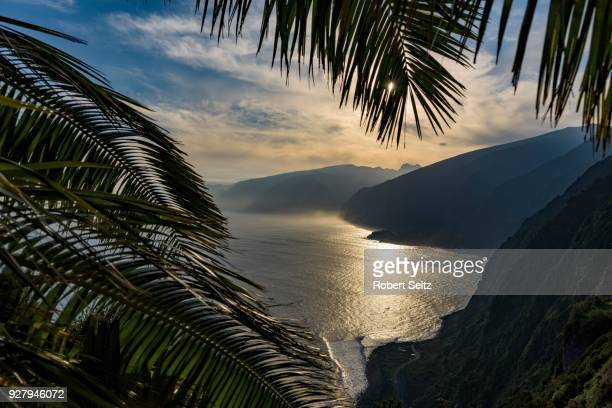 palm leaves and north coast, backlit, porto moniz, madeira, portugal - madeira island stock photos and pictures