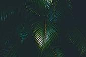https://www.istockphoto.com/photo/palm-leaves-background-gm902447442-248928116
