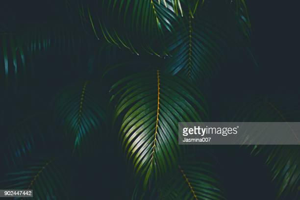 palm leaves background - lush stock pictures, royalty-free photos & images