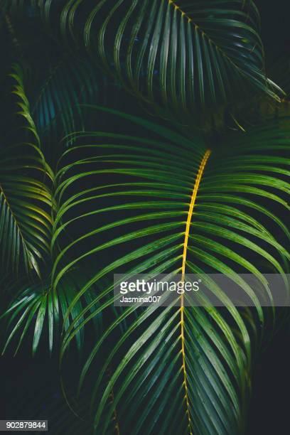 Palm Blätter Hintergrund