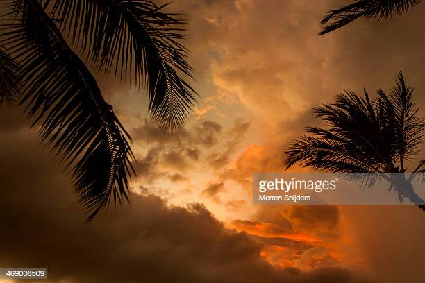 palm leaves before deep sunset - merten snijders stockfoto's en -beelden