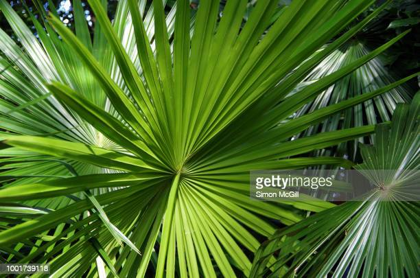 Palm leaves in a rainforest