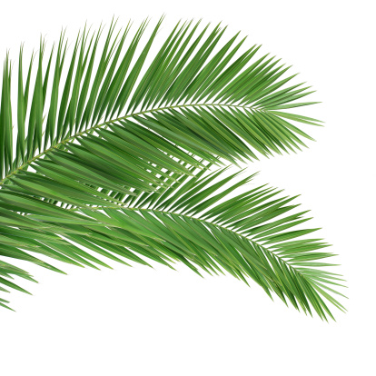 Palm leaves on white background 154309723