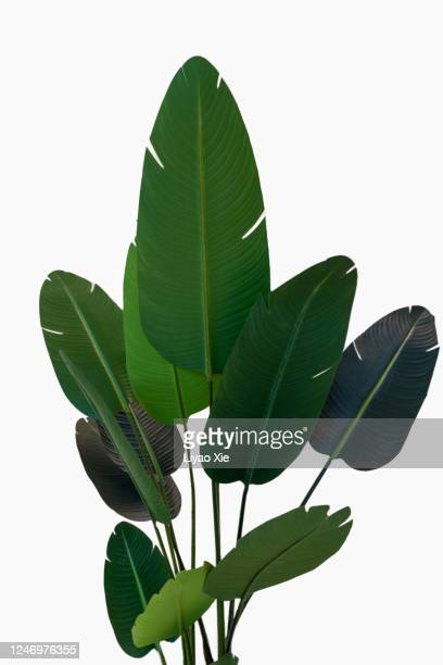 palm leaves - liyao xie stock pictures, royalty-free photos & images