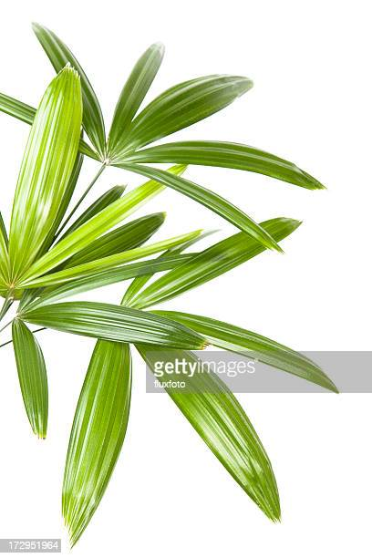 palm leaves - tropical tree stock pictures, royalty-free photos & images