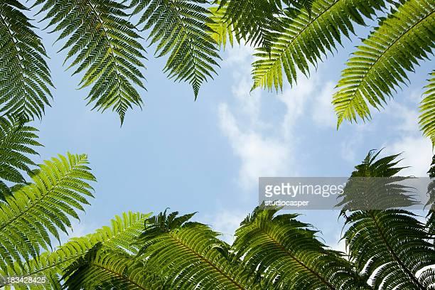 Palm Blätter