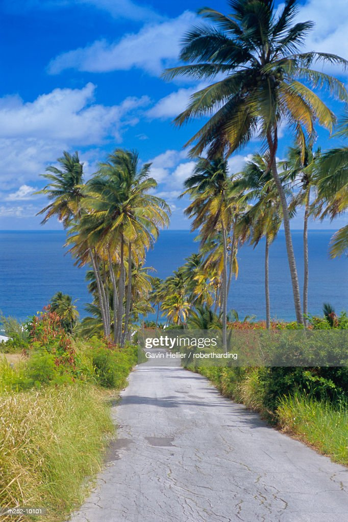 Palm lined road to Bathsheba, Barbados, West Indies, Caribbean, Central America : Foto de stock