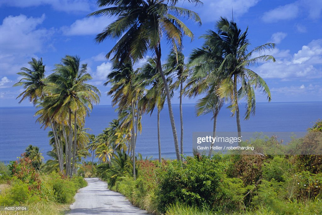 Palm lined road to Bathsheba, Barbados, West Indies, Caribbean, Central America : Foto de stock