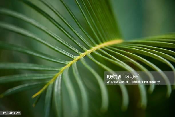 palm macro - ヒルトンヘッド ストックフォトと画像