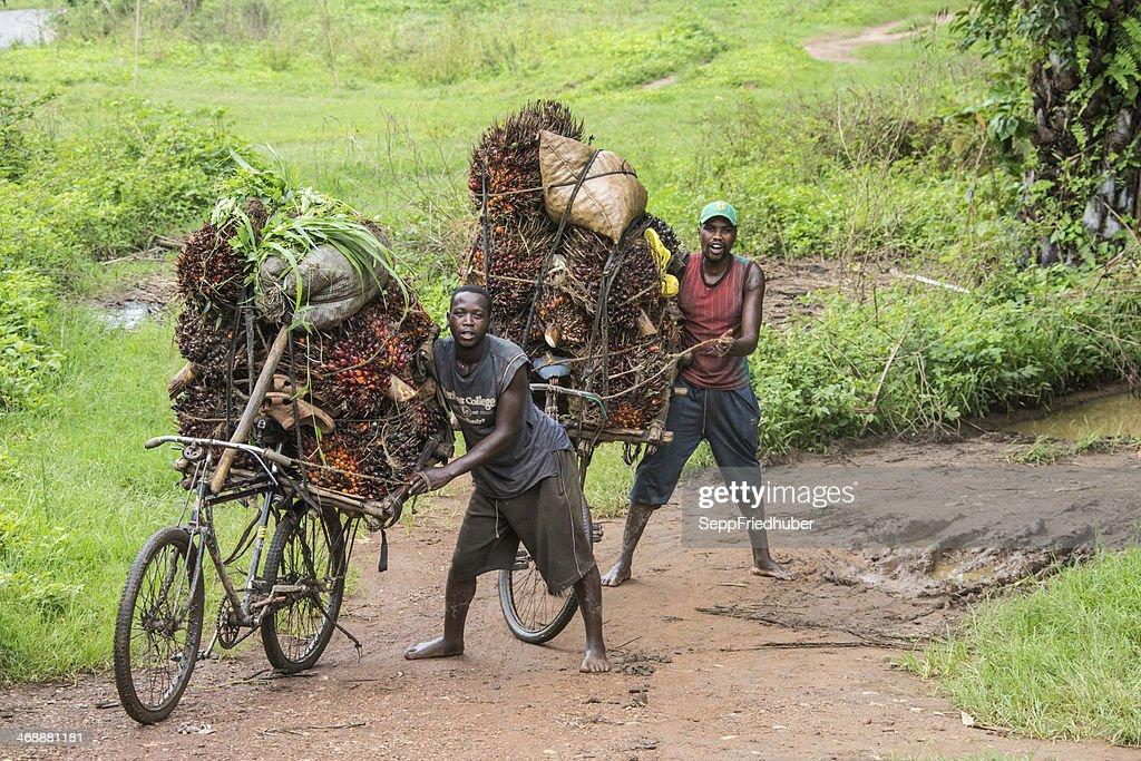 Palm nut - transportation in Burundi : Stock Photo