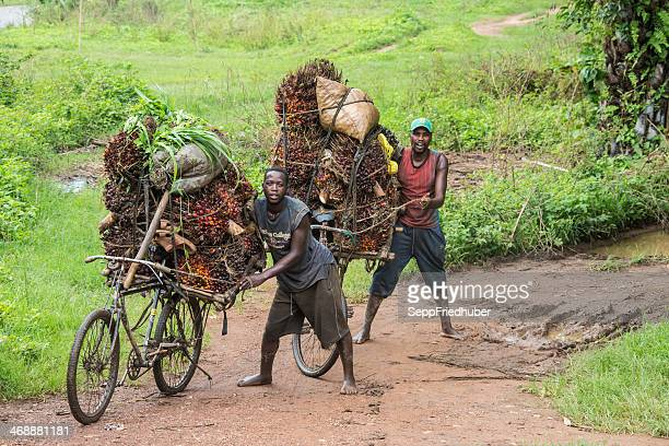 Palm nut - transportation in Burundi