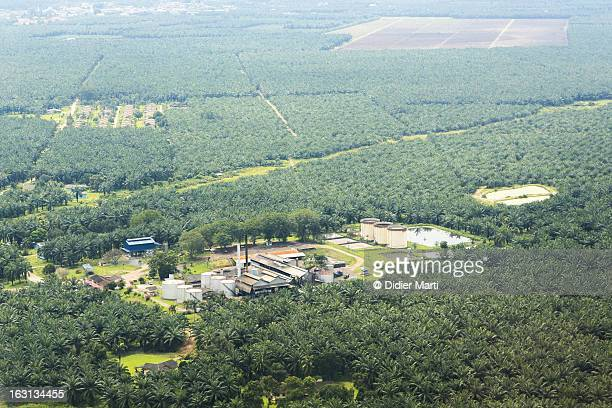 palm oil, ecological impact - didier marti stock photos and pictures