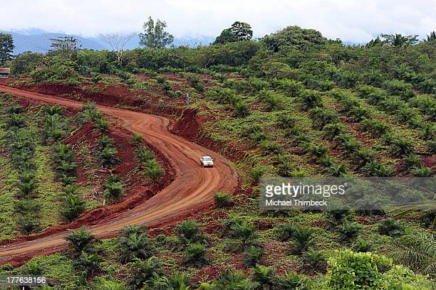 CONTENT] Palm Oil plantation in Kabupaten Konawe Utara Southeast Sulawesi near Kendari city Indonesia Young Palm Oil trees grown from seedlings...