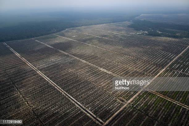 A palm oil plantation is pictured as smog covers area near Palangka Raya Central Kalimantan province Indonesia October 1 2019 Firefighters military...
