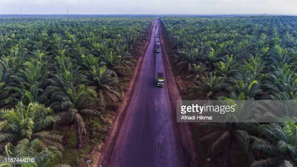 palm oil plantation - kalimantan stock pictures, royalty-free photos & images