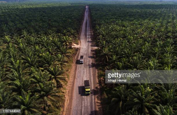 palm oil plantation - palm oil stock pictures, royalty-free photos & images