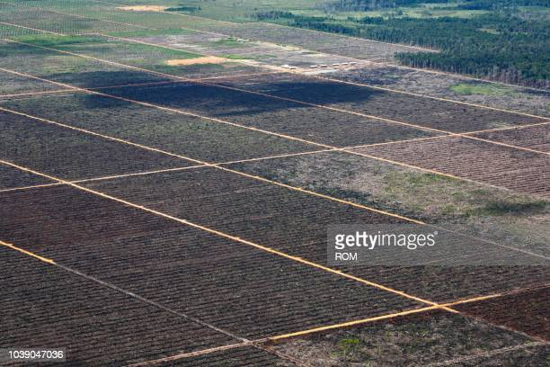 palm oil plantations seen from the genung kelam mountain, sintang, west kalimantan, borneo, indonesia - west kalimantan stock pictures, royalty-free photos & images
