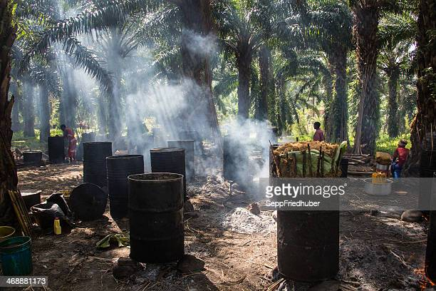 Palm oil - production in Burundi