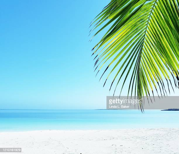 palm over the beach - santa clara cuba stock pictures, royalty-free photos & images