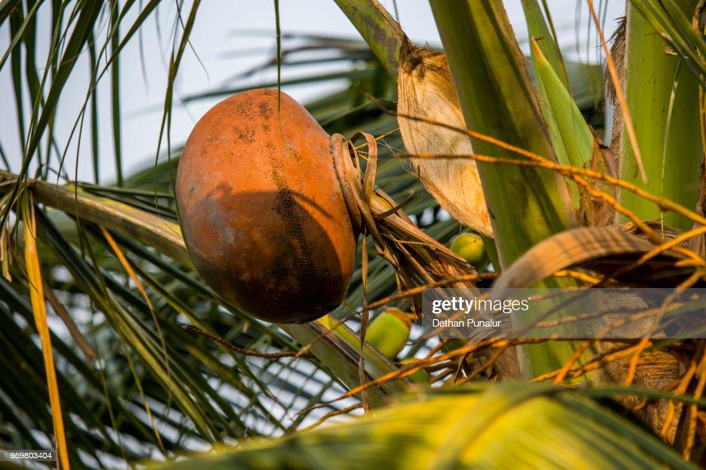 Palm : Stock-Foto
