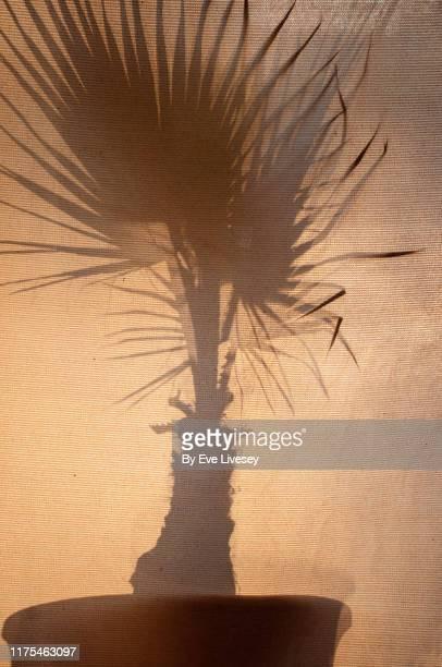 palm plant silhouette - beige fotografías e imágenes de stock