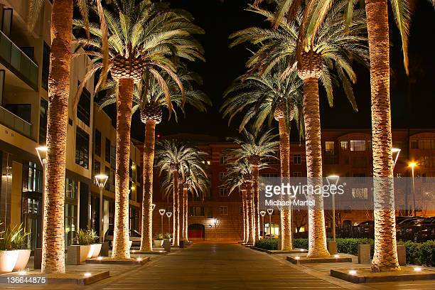 palm row - santa clara county california stock pictures, royalty-free photos & images