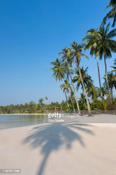 palm shadow on bang bao beach on ko kut island - golf von thailand stock-fotos und bilder