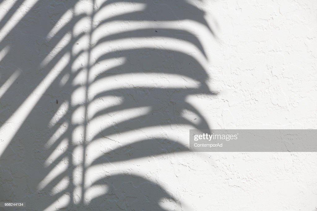 palm silhouette : Stock Photo